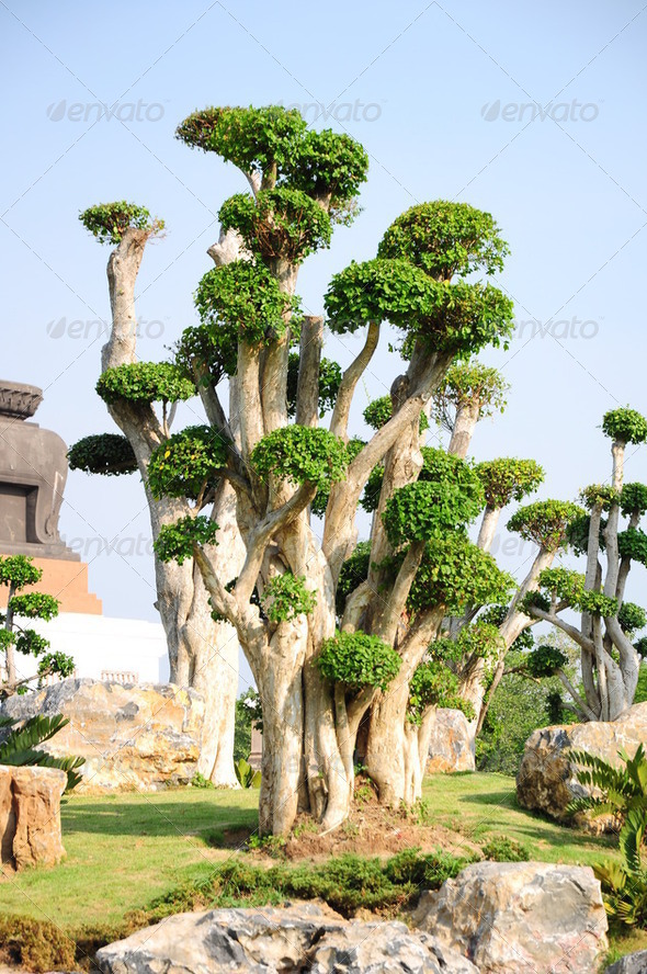 fancy shaped decorative tree - Stock Photo - Images