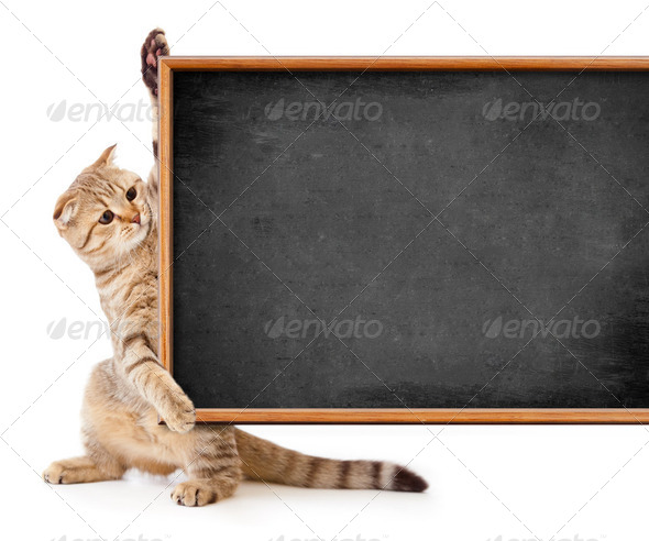 kitten isolated with blackboard for your text - Stock Photo - Images