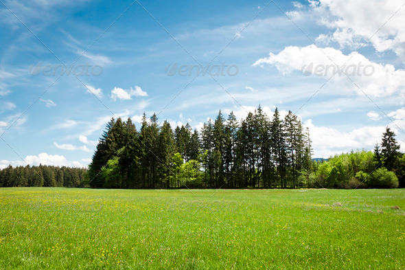 Forest and blue sky - Stock Photo - Images