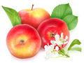 Red apples with green leaf and flowers - PhotoDune Item for Sale
