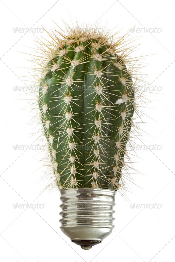 Cactus Growing Out Of A Bulb - Stock Photo - Images