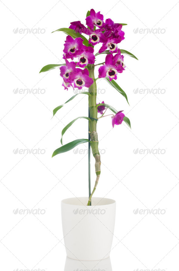 Beautiful pink orchid in a flowerpot - Stock Photo - Images