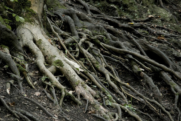 roots - Stock Photo - Images