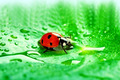 Ladybird - PhotoDune Item for Sale