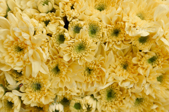 yellow paper flowers seamless background pattern - Stock Photo - Images