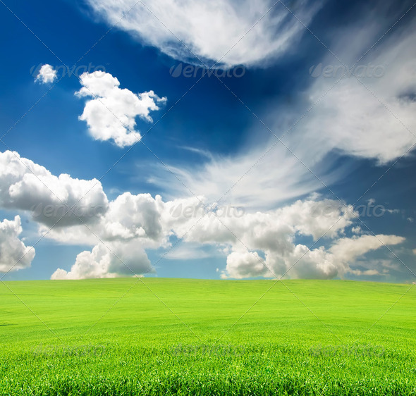 sky with green grass in the field - Stock Photo - Images