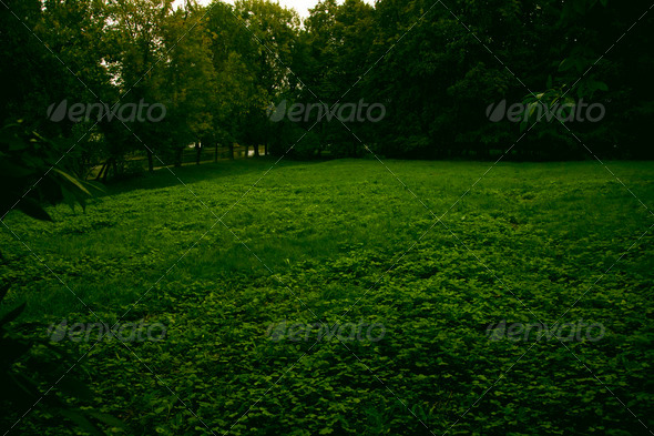 meadow with green grass in the summer forest - Stock Photo - Images