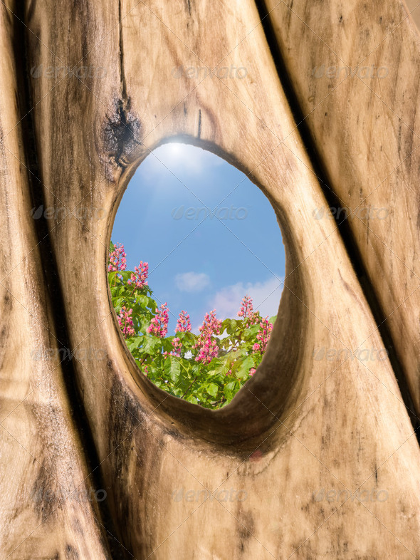 Hole in Wood Flowers - Stock Photo - Images