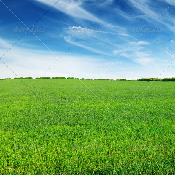 field and sky - Stock Photo - Images