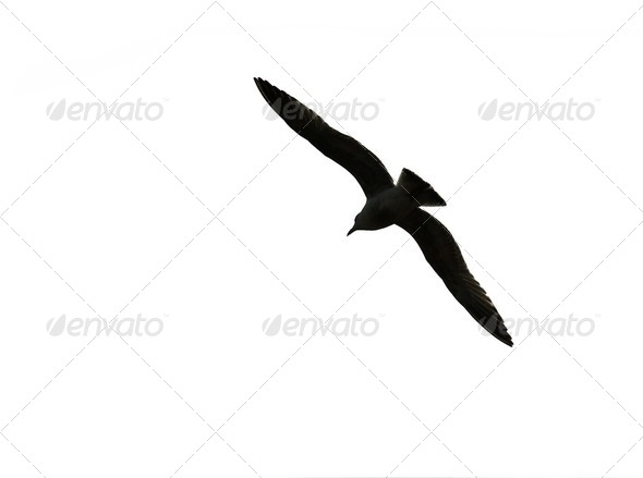 Bird - Stock Photo - Images