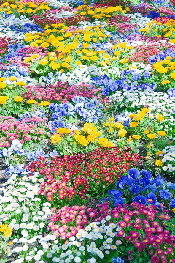 Spring flowers in a garden - Stock Photo - Images