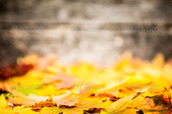 Autumn border from yellow leaves - Stock Photo - Images
