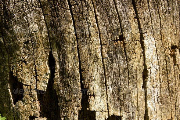 Old wood texture, color brown - Stock Photo - Images