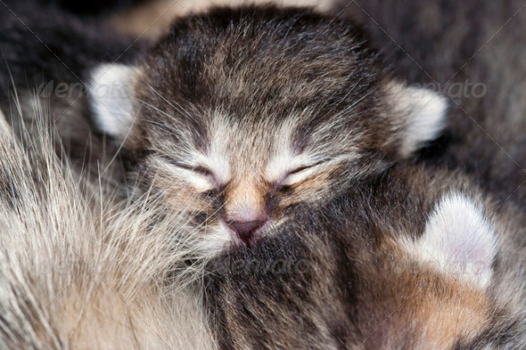 sleeping kitten - Stock Photo - Images