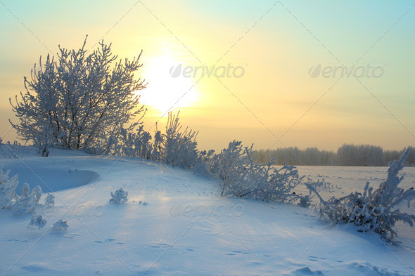 winter morning - Stock Photo - Images