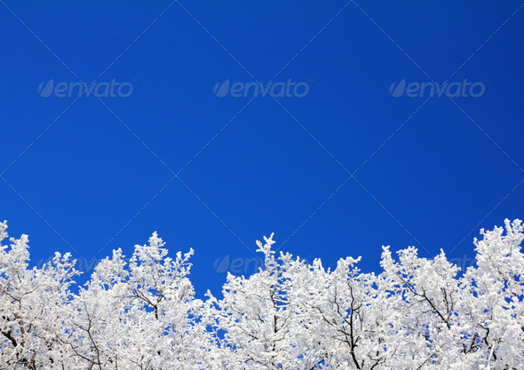 ice winter tree branches under sky - Stock Photo - Images