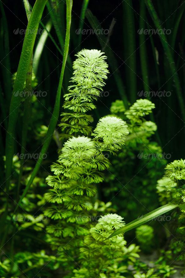 Aquarium Plant - Stock Photo - Images