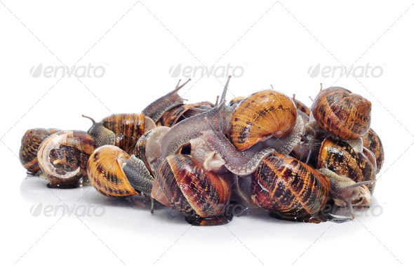 land snails - Stock Photo - Images