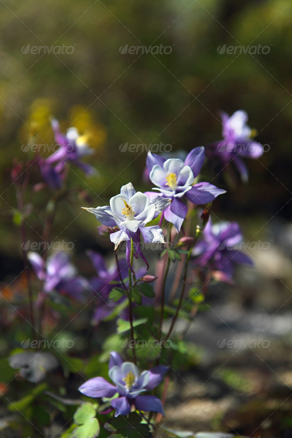 Blue blossom - Stock Photo - Images