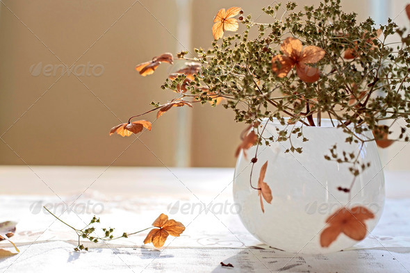 Autumn Decoration - Stock Photo - Images