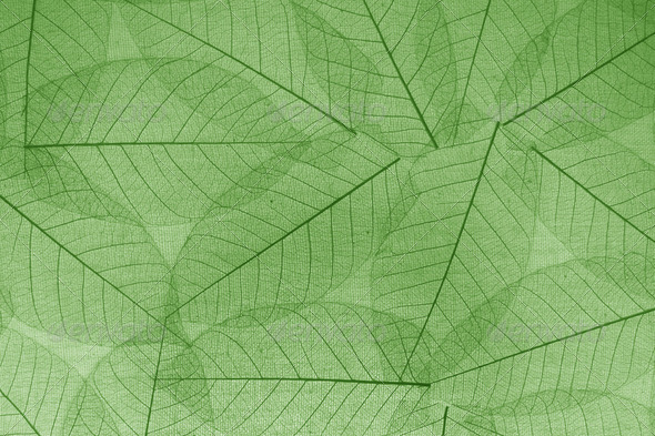 Green transparent leaves paper background for decoration - Stock Photo - Images