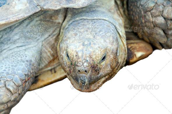Big turtle - Stock Photo - Images