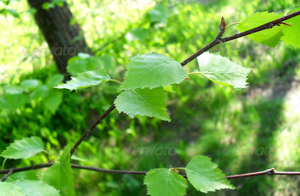 Leaves of a tree - Stock Photo - Images