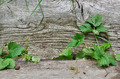 vegetation between two wooden boards - PhotoDune Item for Sale