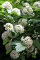 Spring Flowering Shrub - PhotoDune Item for Sale