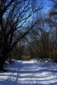 Winter Forest - PhotoDune Item for Sale