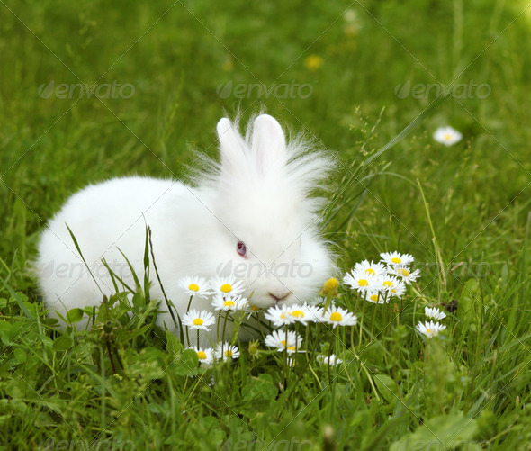 White bunny - Stock Photo - Images