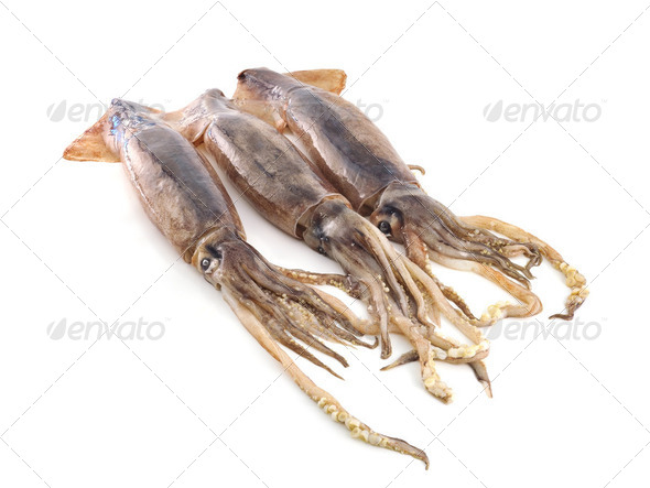 nice fresh squid - Stock Photo - Images