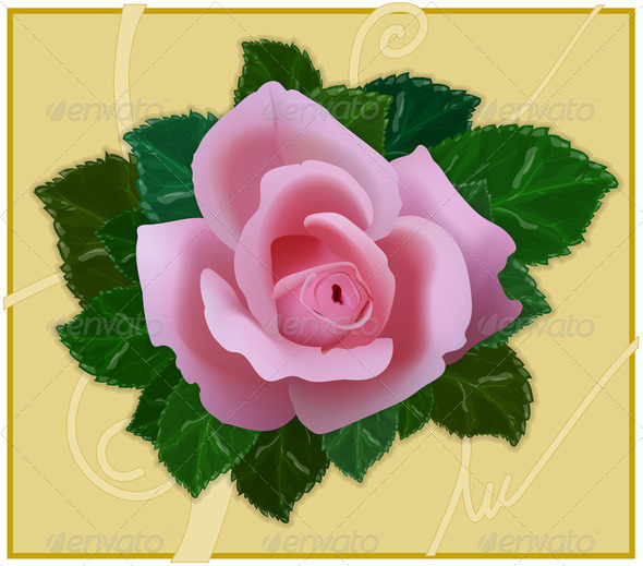 Vector Rose - Stock Photo - Images