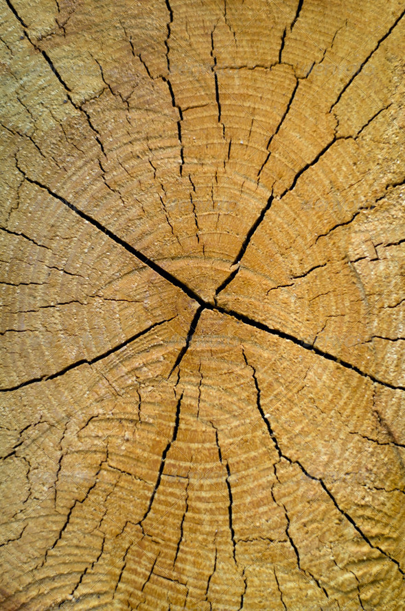 Old pine tree cut texture - Stock Photo - Images