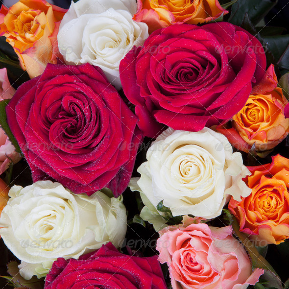 bunch of roses - Stock Photo - Images