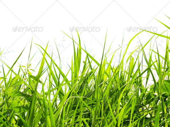 Grass in forest - Stock Photo - Images
