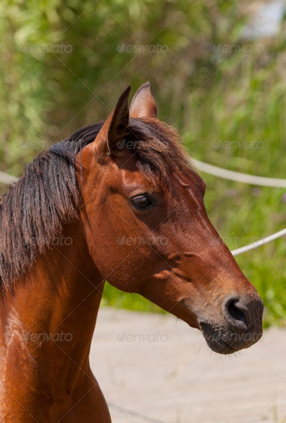 Closeup of a horse - Stock Photo - Images