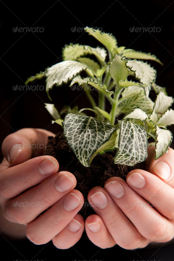 Green plant in female hands on black - Stock Photo - Images