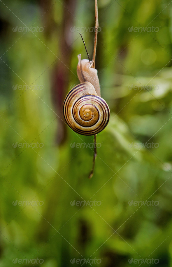 Snail eating plant stem - Stock Photo - Images