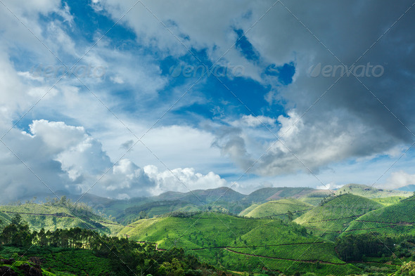 Tea plantations and sky with clouds. Munnar, Kerala, India  - Stock Photo - Images