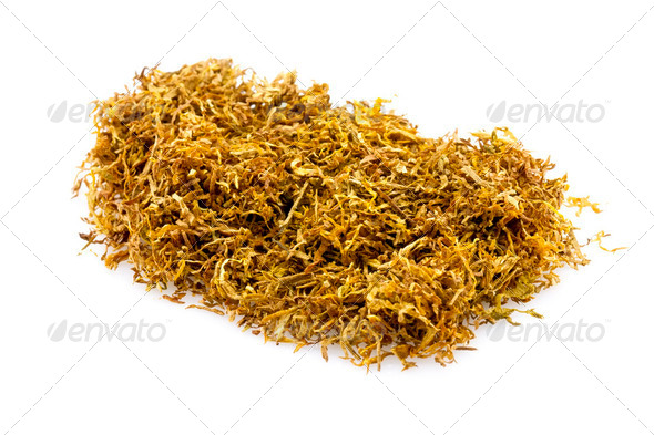 Tobacco - Stock Photo - Images