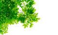 Green leaves on white - PhotoDune Item for Sale