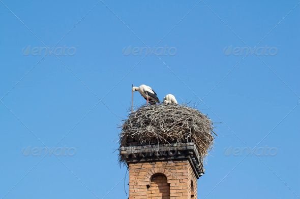 Stork on chimney - Stock Photo - Images
