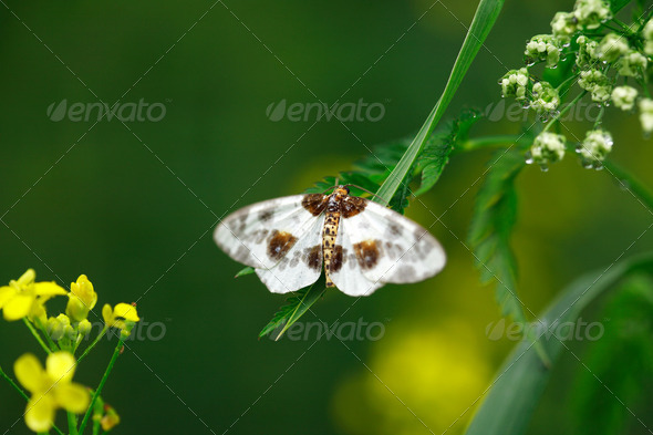 Butterfly On Grass - Stock Photo - Images