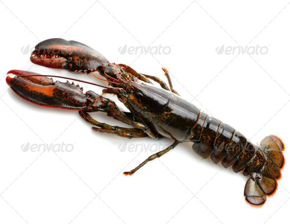 Raw Lobster - Stock Photo - Images