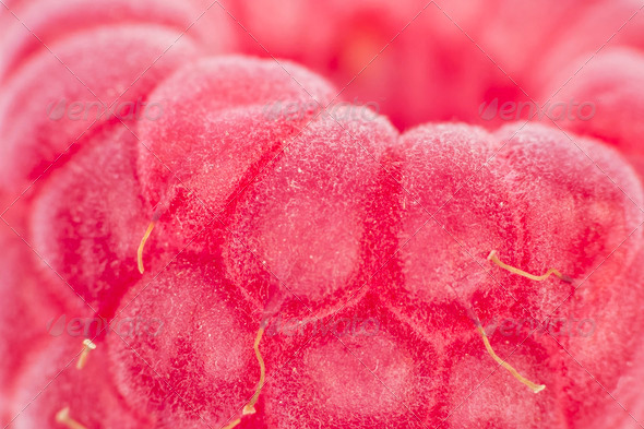 Raspberry Macro - Stock Photo - Images