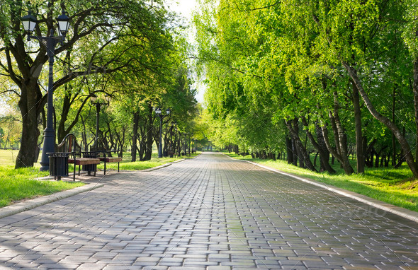 Alley in green park. - Stock Photo - Images
