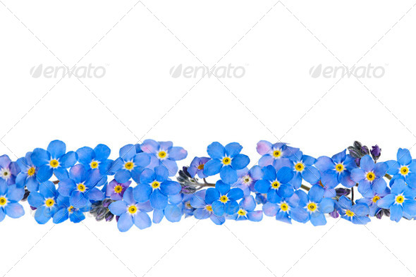 Blue spring flower border - Stock Photo - Images