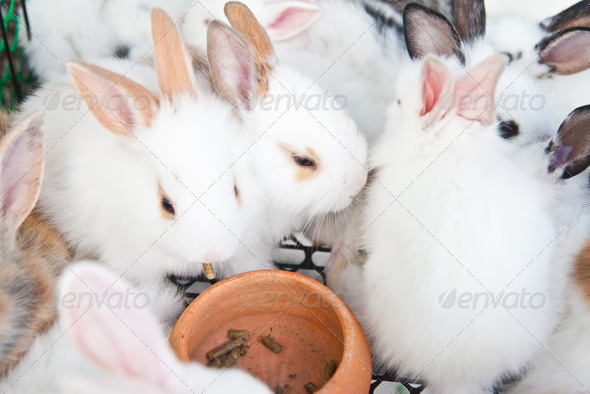 Young rabbits eating food - Stock Photo - Images