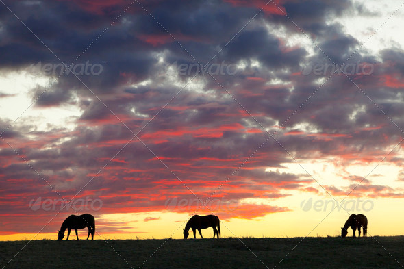 Horse Silhouettes - Stock Photo - Images